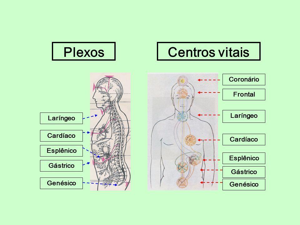 Coronário Frontal Laríngeo Cardíaco Esplênico Gástrico Genésico Centros vitaisPlexos Laríngeo Cardíaco Esplênico Gástrico Genésico