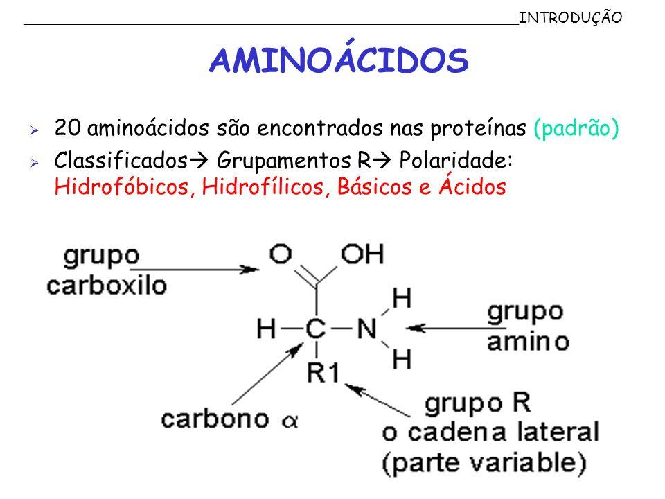 AMINOÁCIDOS 20 aminoácidos são encontrados nas proteínas (padrão) Classificados Grupamentos R Polaridade: Hidrofóbicos, Hidrofílicos, Básicos e Ácidos
