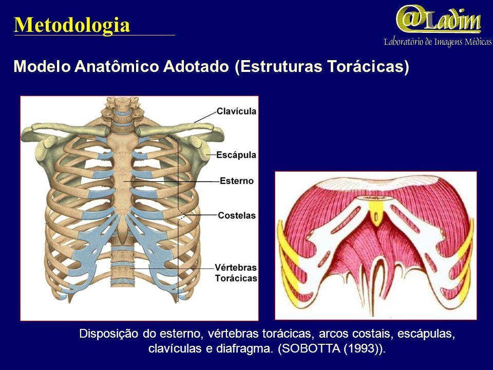 Metodologia Modelo Anatômico Adotado (Estruturas Torácicas) Disposição do esterno, vértebras torácicas, arcos costais, escápulas, clavículas e diafragma.
