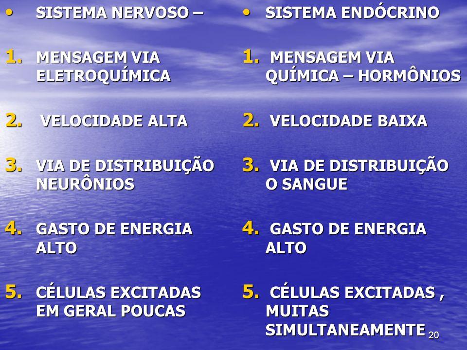 20 SISTEMA NERVOSO – SISTEMA NERVOSO – 1. MENSAGEM VIA ELETROQUÍMICA 2. VELOCIDADE ALTA 3. VIA DE DISTRIBUIÇÃO NEURÔNIOS 4. GASTO DE ENERGIA ALTO 5. C