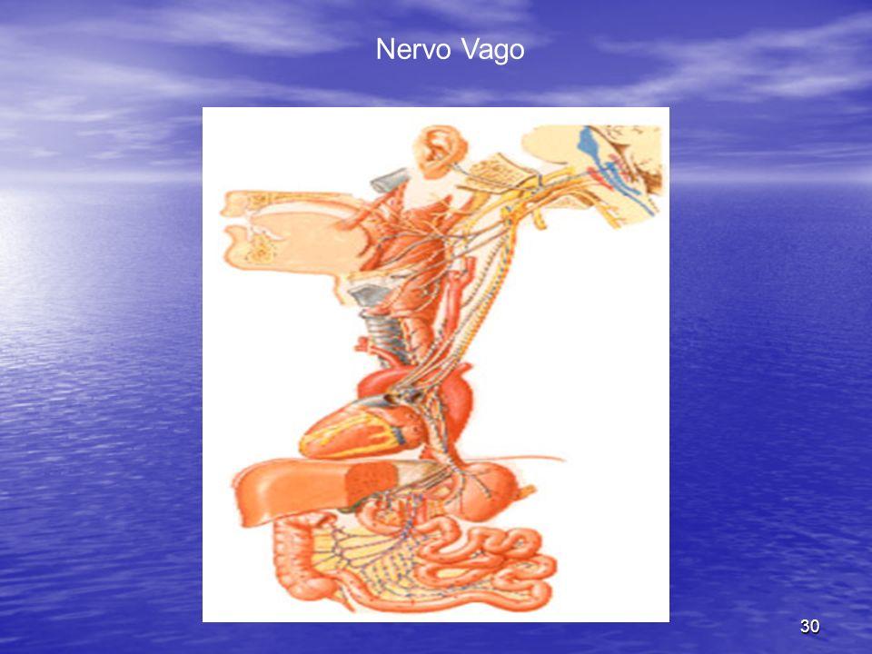 30 Nervo Vago