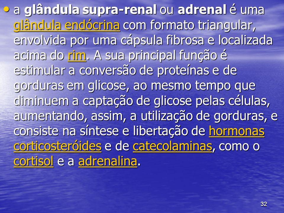 32 a glândula supra-renal ou adrenal é uma glândula endócrina com formato triangular, envolvida por uma cápsula fibrosa e localizada acima do rim. A s