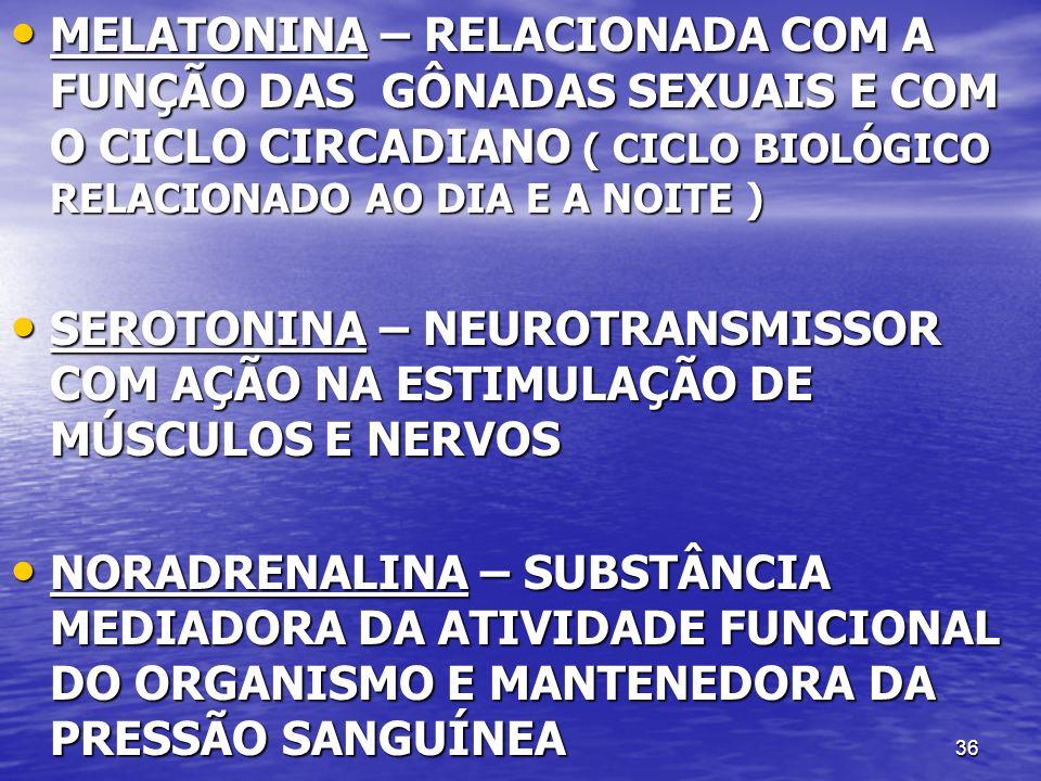 36 MELATONINA – RELACIONADA COM A FUNÇÃO DAS GÔNADAS SEXUAIS E COM O CICLO CIRCADIANO ( CICLO BIOLÓGICO RELACIONADO AO DIA E A NOITE ) MELATONINA – RELACIONADA COM A FUNÇÃO DAS GÔNADAS SEXUAIS E COM O CICLO CIRCADIANO ( CICLO BIOLÓGICO RELACIONADO AO DIA E A NOITE ) SEROTONINA – NEUROTRANSMISSOR COM AÇÃO NA ESTIMULAÇÃO DE MÚSCULOS E NERVOS SEROTONINA – NEUROTRANSMISSOR COM AÇÃO NA ESTIMULAÇÃO DE MÚSCULOS E NERVOS NORADRENALINA – SUBSTÂNCIA MEDIADORA DA ATIVIDADE FUNCIONAL DO ORGANISMO E MANTENEDORA DA PRESSÃO SANGUÍNEA NORADRENALINA – SUBSTÂNCIA MEDIADORA DA ATIVIDADE FUNCIONAL DO ORGANISMO E MANTENEDORA DA PRESSÃO SANGUÍNEA