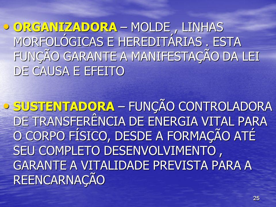 25 ORGANIZADORA – MOLDE, LINHAS MORFOLÓGICAS E HEREDITÁRIAS. ESTA FUNÇÃO GARANTE A MANIFESTAÇÃO DA LEI DE CAUSA E EFEITO ORGANIZADORA – MOLDE, LINHAS