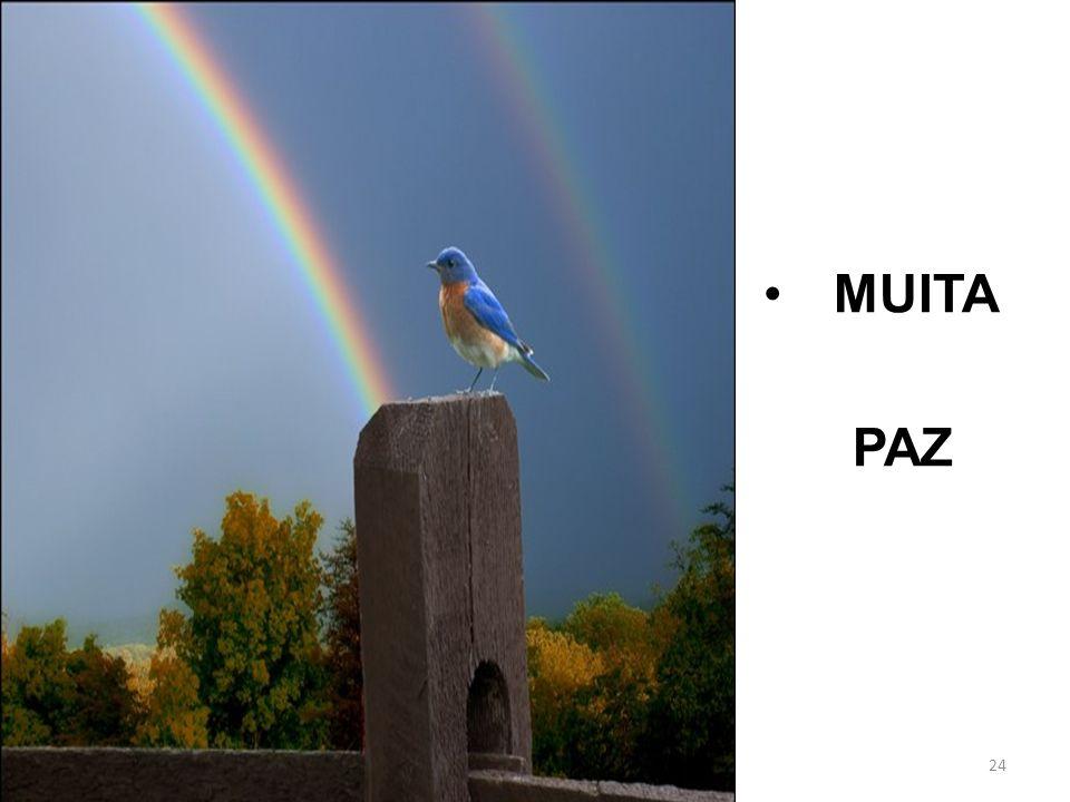 24 MUITA PAZ
