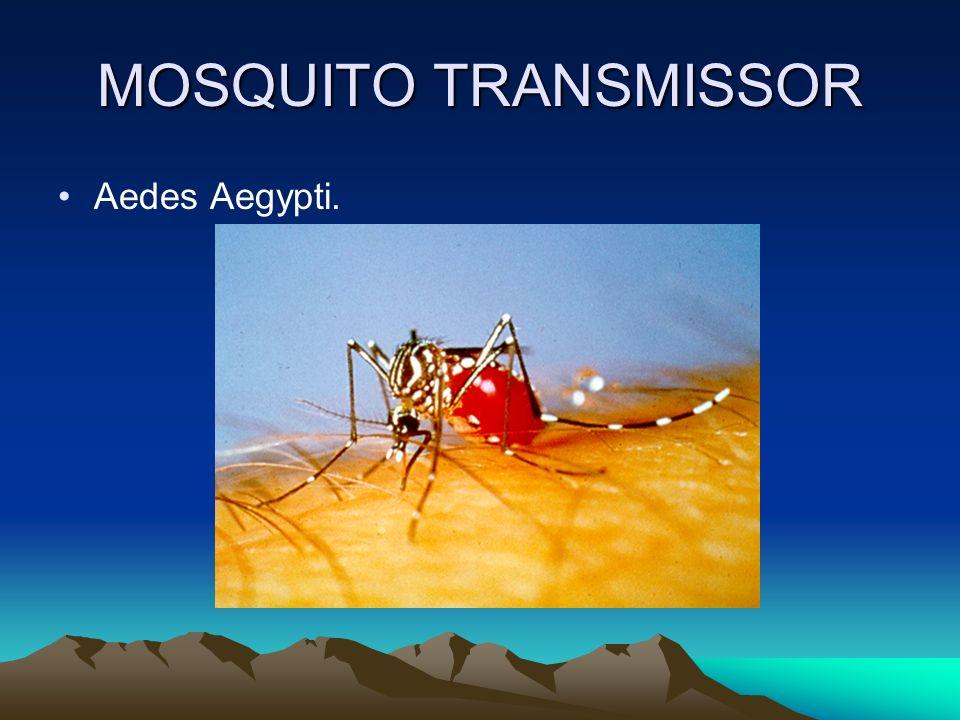 MOSQUITO TRANSMISSOR Aedes Aegypti.