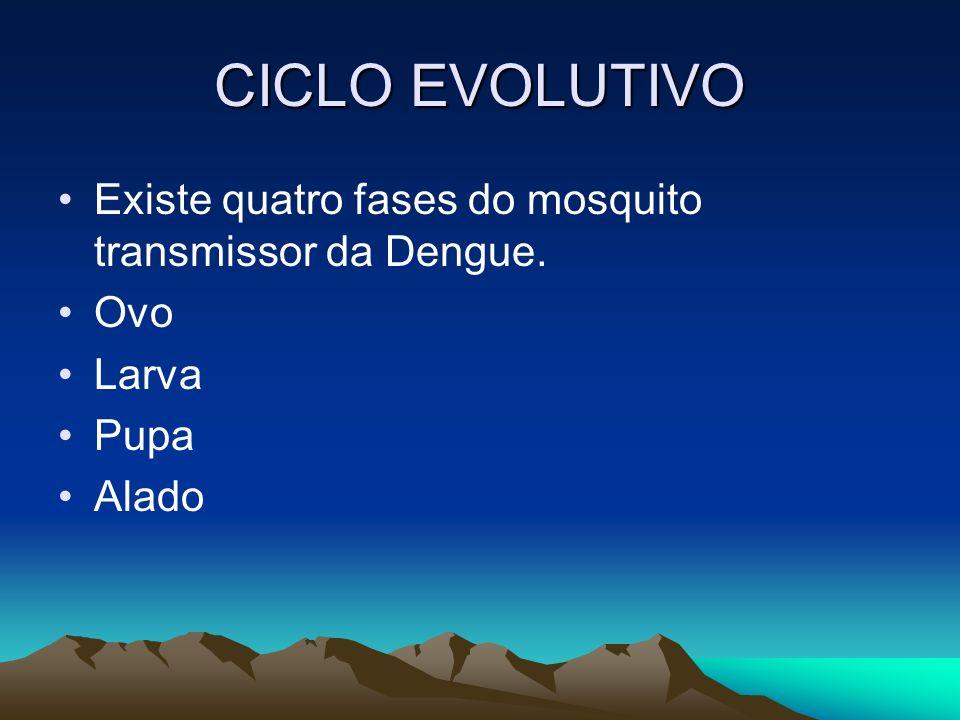 CICLO EVOLUTIVO Existe quatro fases do mosquito transmissor da Dengue. Ovo Larva Pupa Alado