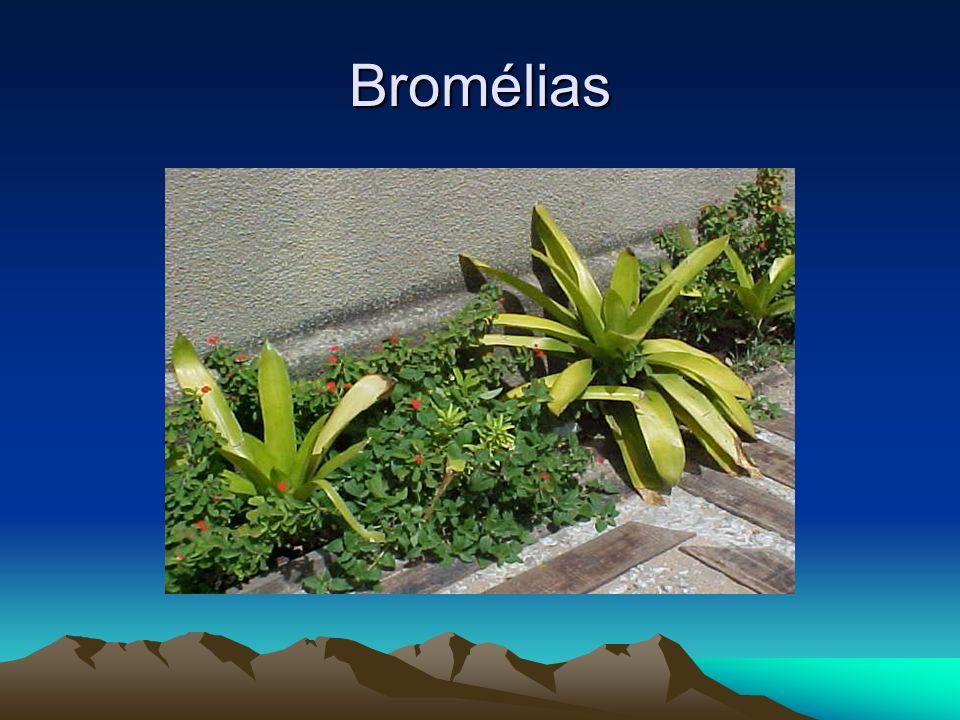 Bromélias