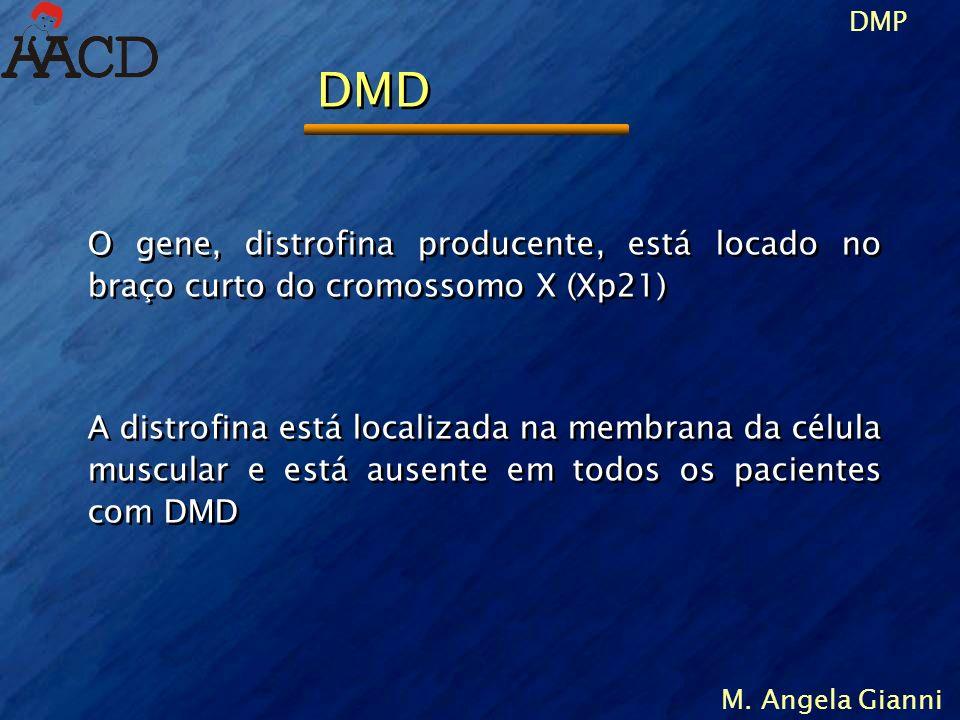 DMP M. Angela Gianni O gene, distrofina producente, está locado no braço curto do cromossomo X (Xp21) A distrofina está localizada na membrana da célu