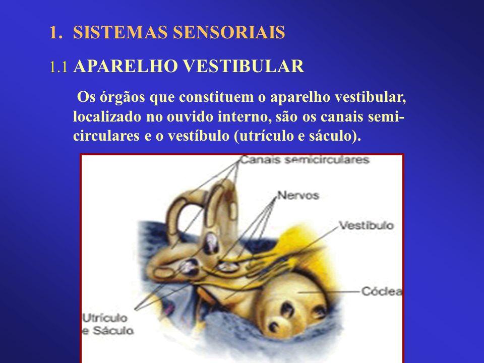 1.SISTEMAS SENSORIAIS 1.1 APARELHO VESTIBULAR Os órgãos que constituem o aparelho vestibular, localizado no ouvido interno, são os canais semi- circul