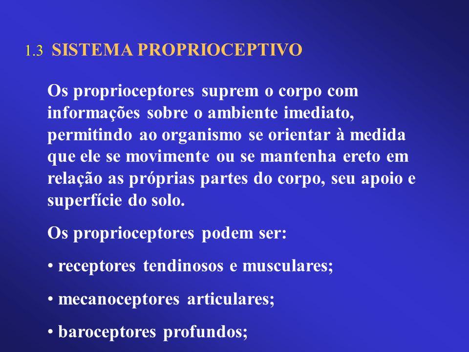 1.3 SISTEMA PROPRIOCEPTIVO Os proprioceptores suprem o corpo com informações sobre o ambiente imediato, permitindo ao organismo se orientar à medida q
