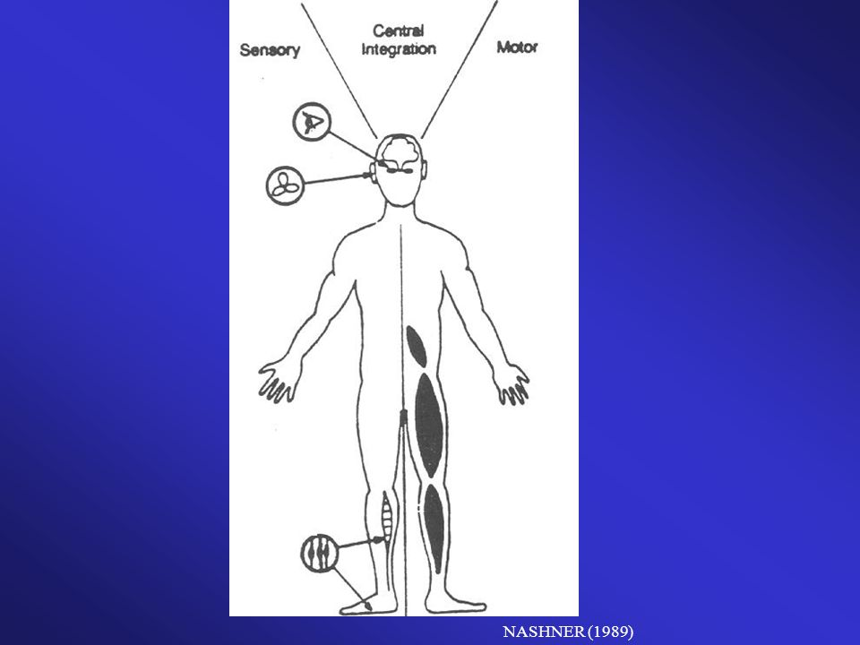 O Sistema de Controle Postural envolve os componentes sensoriais, motores e músculo- esquelético, que são os grandes responsáveis pela orientação e pelo equilíbrio da postura.