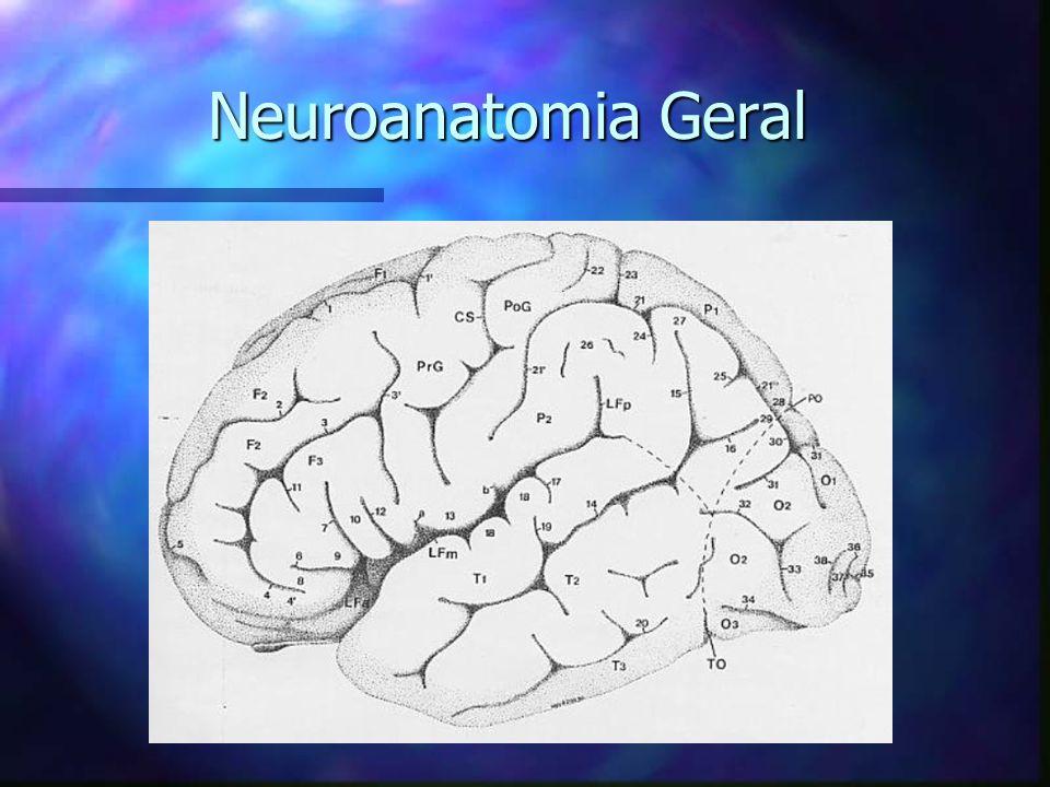 Neuroanatomia Geral