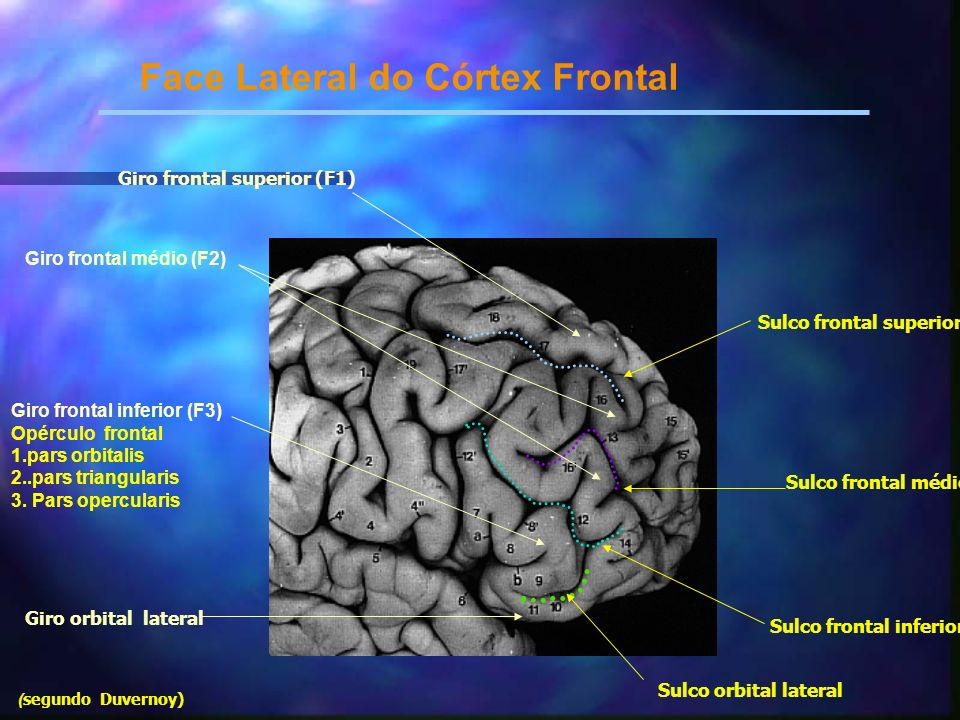 Caso clínico 2 AE: Sem queixas nos outros sistemas orgânicos.