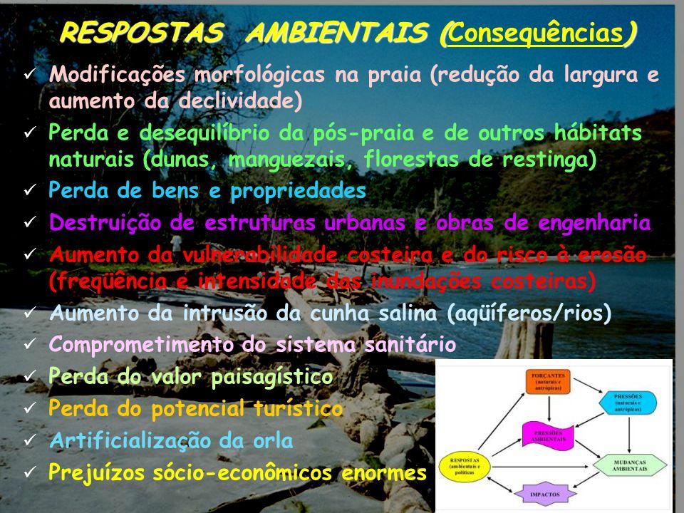12 RESPOSTAS AMBIENTAIS () RESPOSTAS AMBIENTAIS (Consequências) Modificações morfológicas na praia (redução da largura e aumento da declividade) Perda