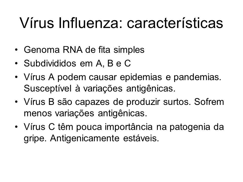 Vírus Influenza: características Genoma RNA de fita simples Subdivididos em A, B e C Vírus A podem causar epidemias e pandemias. Susceptível à variaçõ