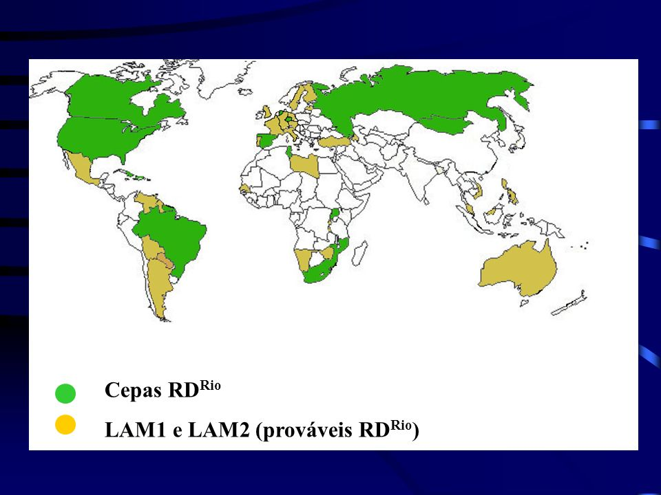 Cepas RD Rio LAM1 e LAM2 (prováveis RD Rio )