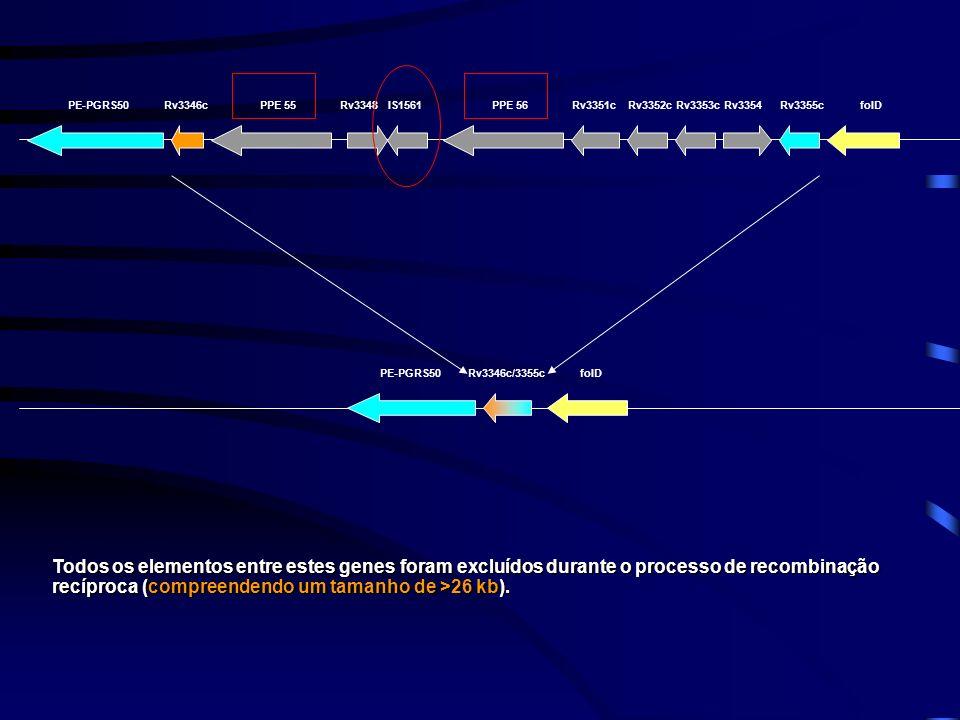 PE-PGRS50Rv3346cPPE 55Rv3348IS1561PPE 56Rv3351cRv3352cRv3353cRv3354Rv3355cfolD PE-PGRS50folDRv3346c/3355c Todos os elementos entre estes genes foram e