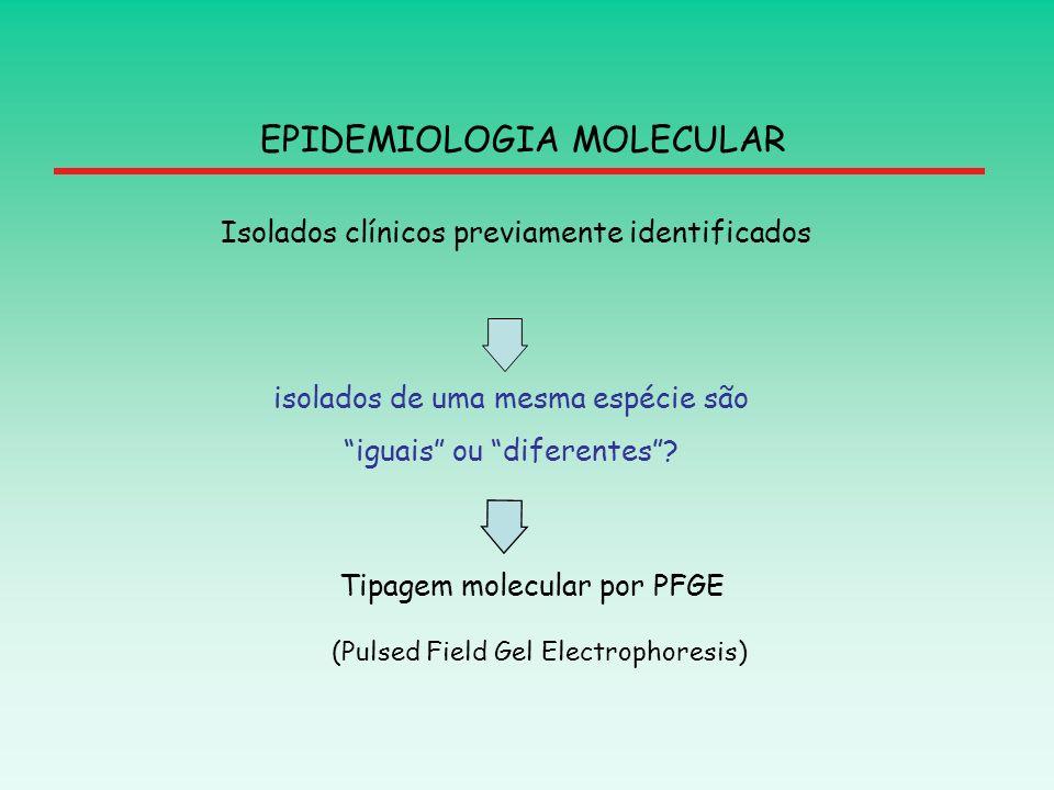 EPIDEMIOLOGIA MOLECULAR isolados de uma mesma espécie são iguais ou diferentes? Isolados clínicos previamente identificados Tipagem molecular por PFGE