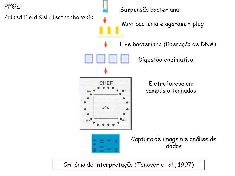 Captura de imagem e análise de dados Eletroforese em campos alternados Suspensão bacteriana Mix: bactéria e agarose = plug Lise bacteriana (liberação