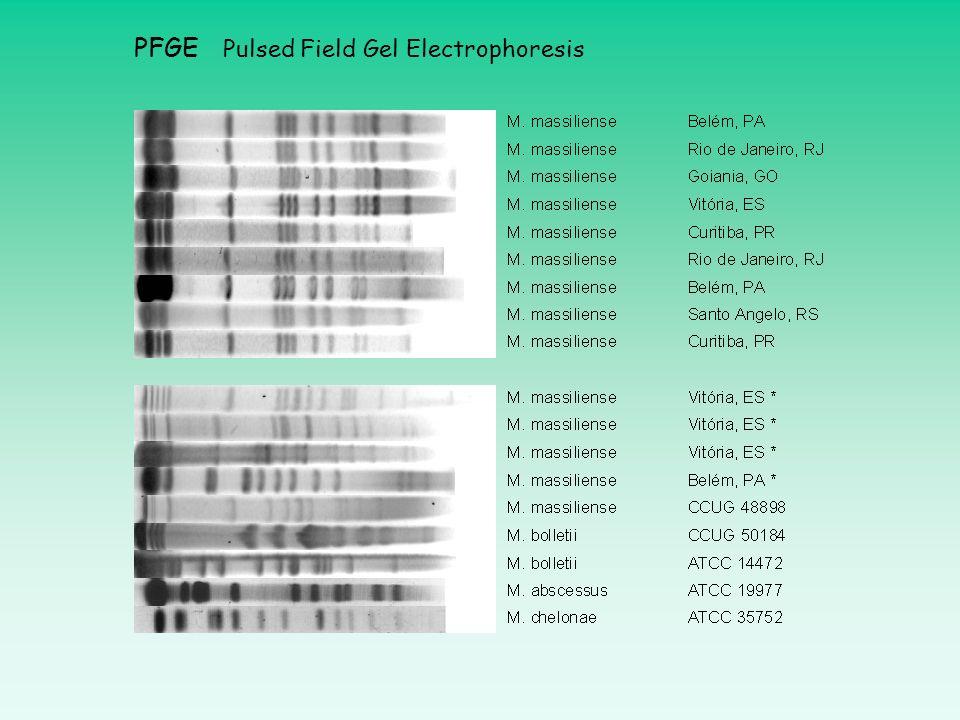 PFGE Pulsed Field Gel Electrophoresis