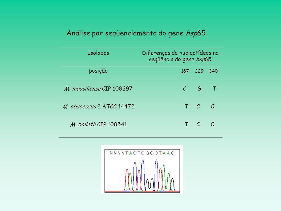 IsoladosDiferenças de nucleotídeos na seqüência do gene hsp65 posição 187 229 340 M. massiliense CIP 108297 C G T M. abscessus 2 ATCC 14472 T C C M. b