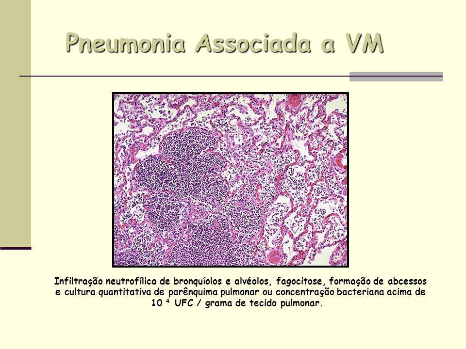 Pneumonia Associada a VM Infiltração neutrofílica de bronquíolos e alvéolos, fagocitose, formação de abcessos e cultura quantitativa de parênquima pul
