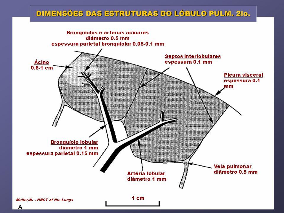 1 cm Bronquíolos e artérias acinares diâmetro 0.5 mm espessura parietal bronquiolar 0.05-0.1 mm Septos interlobulares espessura 0.1 mm Pleura visceral