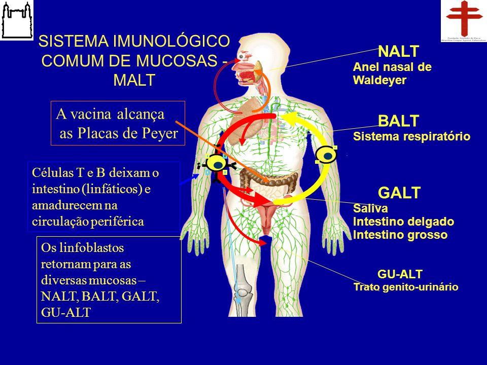 GALT Saliva Intestino delgado Intestino grosso BALT Sistema respiratório NALT Anel nasal de Waldeyer GU-ALT Trato genito-urinário SISTEMA IMUNOLÓGICO