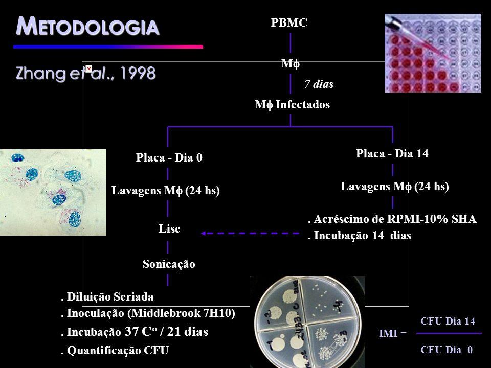 M Infectados Lise. Acréscimo de RPMI-10% SHA. Incubação 14 dias Sonicação. Diluição Seriada. Inoculação (Middlebrook 7H10). Incubação 37 C / 21 dias.