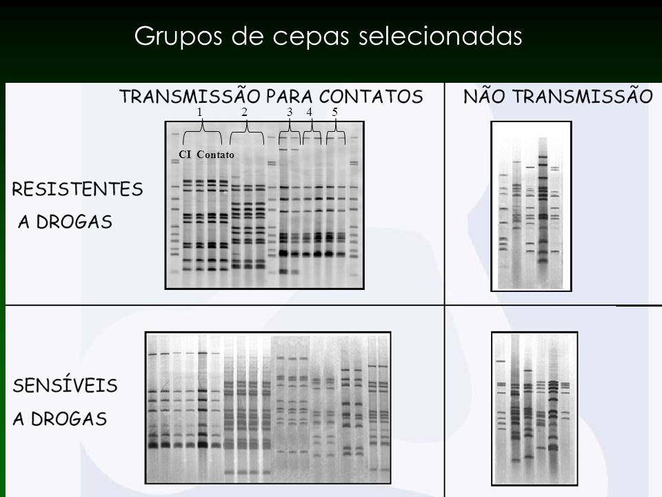 Grupos de cepas selecionadas 1 2 3 4 5 CI Contato