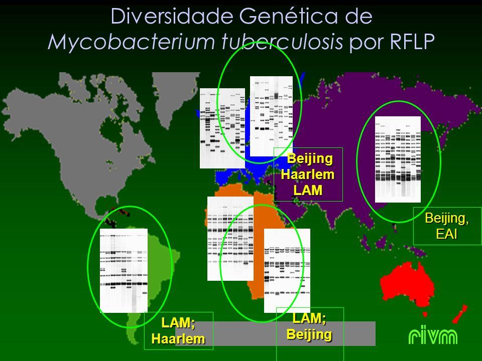 Diversidade Genética de Mycobacterium tuberculosis por RFLP Beijing, EAI LAM; Haarlem LAM; Beijing Beijing BeijingHaarlemLAM