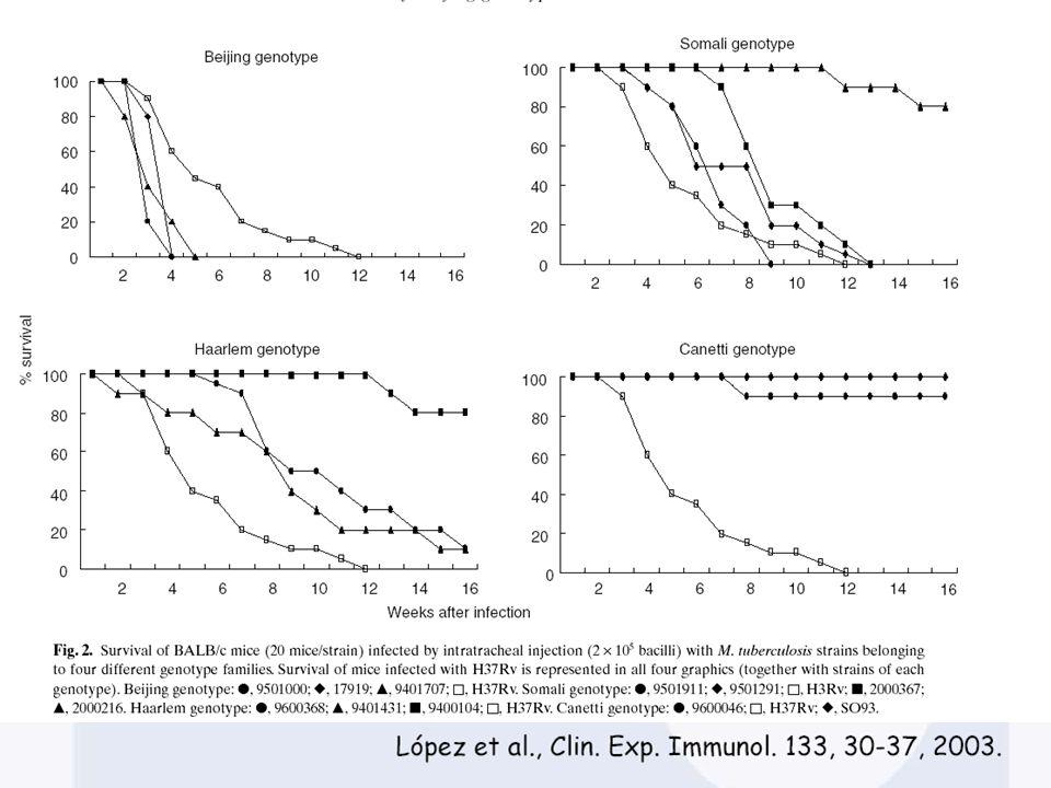 Avaliação da Virulência Modelos Cultura de Células Macrófago Murino – - Zhang et al., 1998 Macrófagos Humanos - Zhang et al., 1998