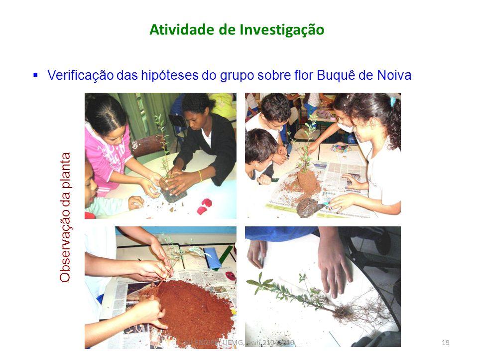 Atividade de Investigação Verificação das hipóteses do grupo sobre flor Buquê de Noiva Observação da planta 19XV ENDIPE, UFMG, ewh 21042010