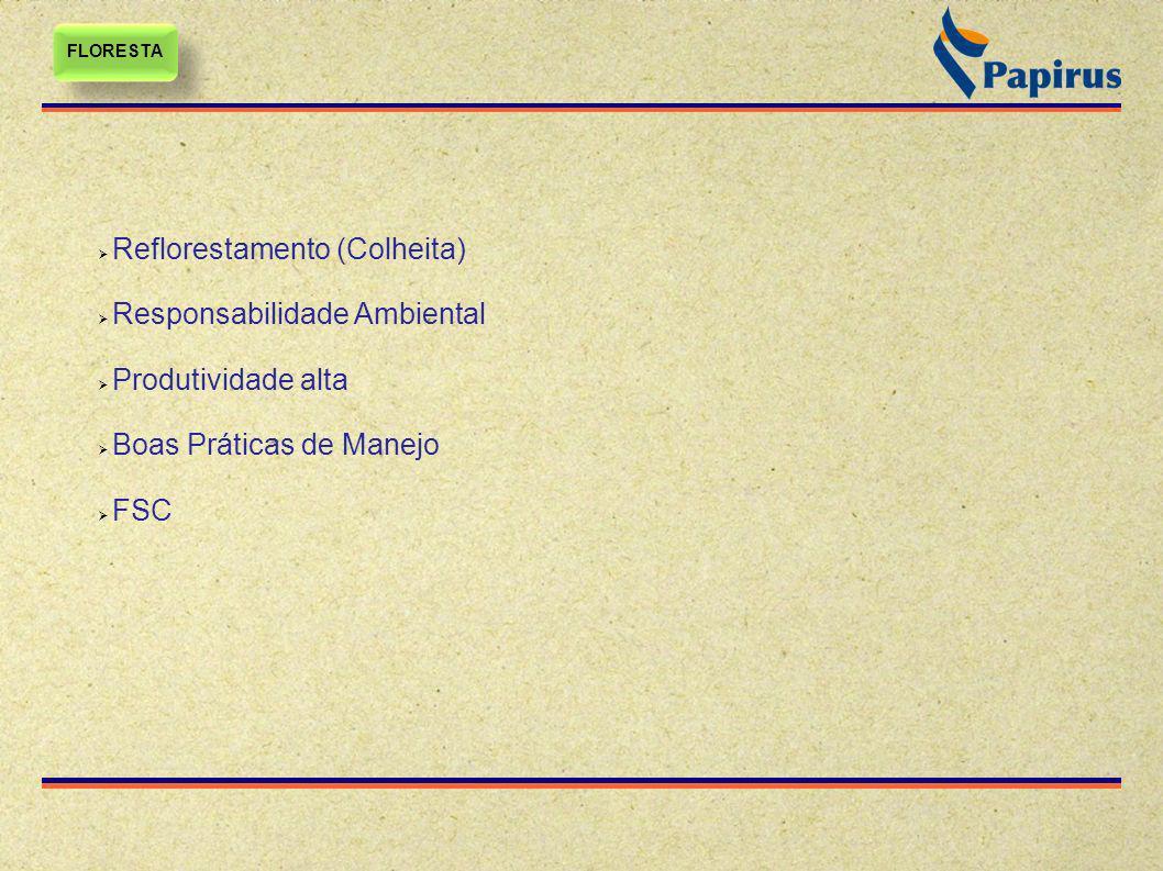 Papelcartão Reciclado x Virgem FLORESTA PRODUÇÃO DE FIBRA PRODUÇÃO DE FIBRA