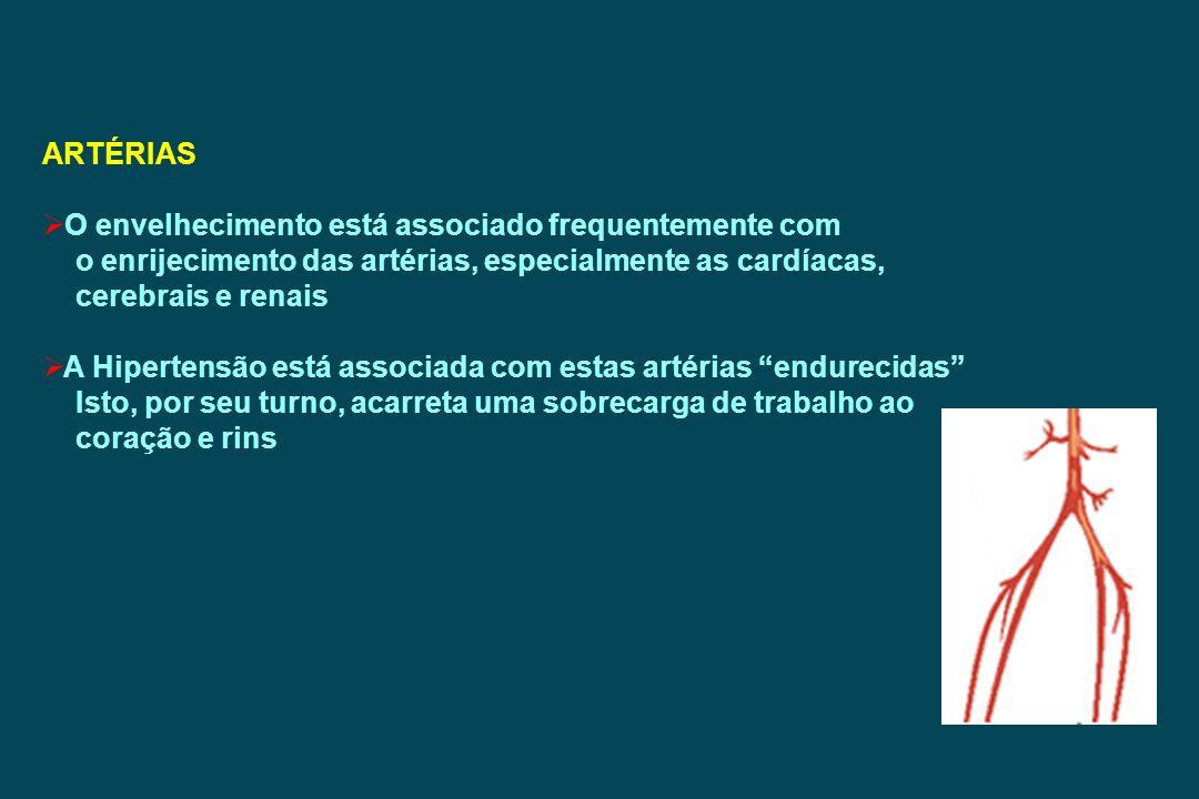 ARTÉRIAS O envelhecimento está associado frequentemente com o enrijecimento das artérias, especialmente as cardíacas, cerebrais e renais A Hipertensão