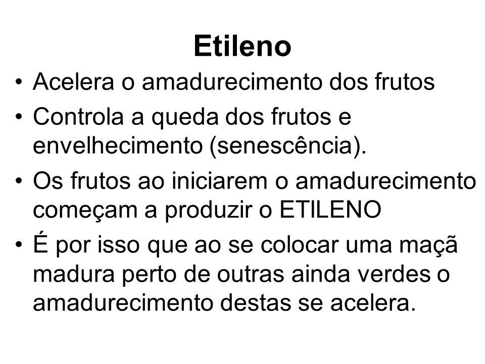 Etileno Acelera o amadurecimento dos frutos Controla a queda dos frutos e envelhecimento (senescência). Os frutos ao iniciarem o amadurecimento começa