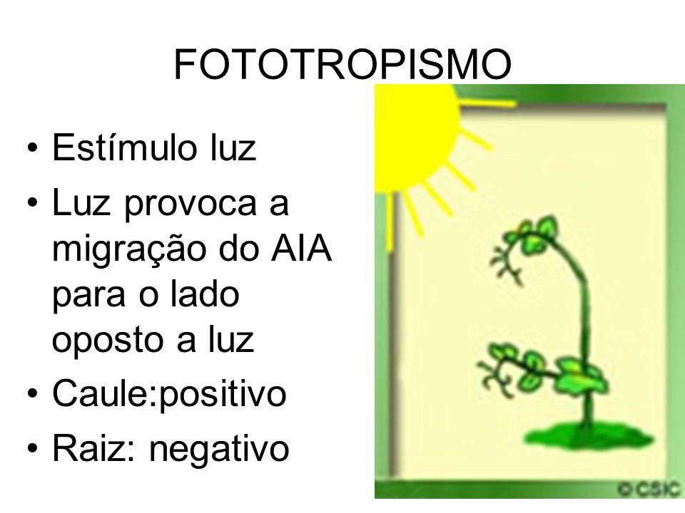FOTOTROPISMO Estímulo luz Luz provoca a migração do AIA para o lado oposto a luz Caule:positivo Raiz: negativo