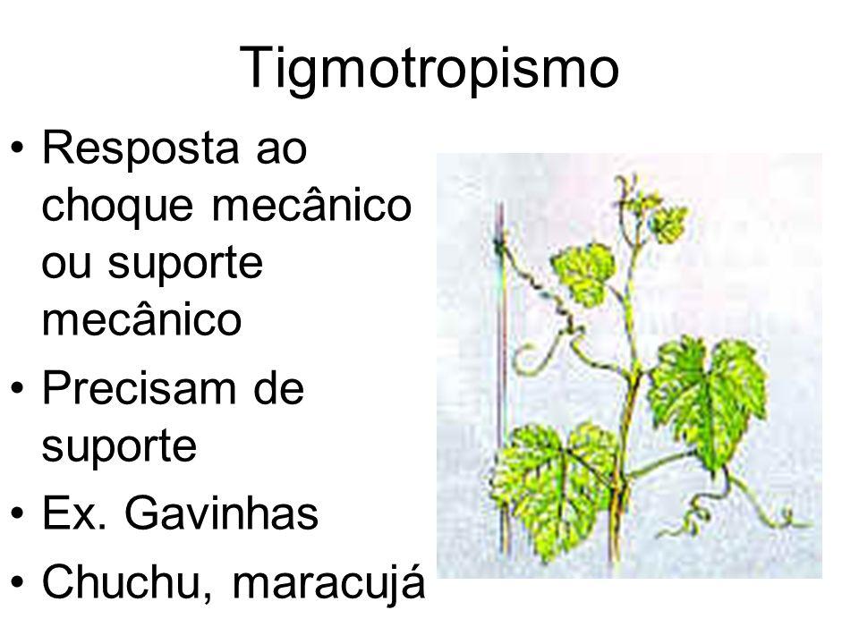 Tigmotropismo Resposta ao choque mecânico ou suporte mecânico Precisam de suporte Ex. Gavinhas Chuchu, maracujá