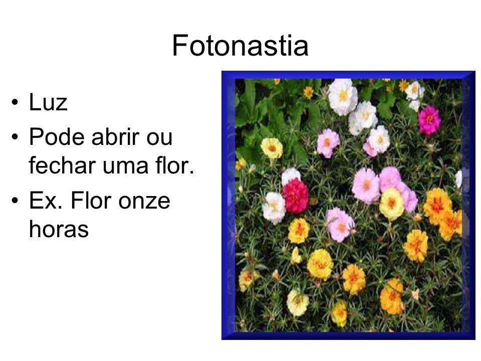 Fotonastia Luz Pode abrir ou fechar uma flor. Ex. Flor onze horas