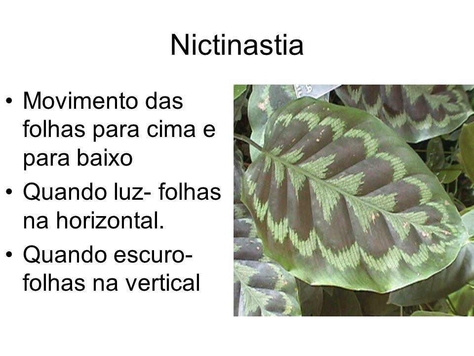 Nictinastia Movimento das folhas para cima e para baixo Quando luz- folhas na horizontal. Quando escuro- folhas na vertical