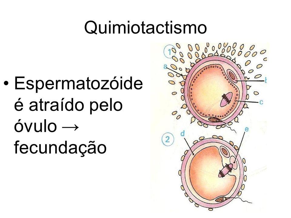 Quimiotactismo Espermatozóide é atraído pelo óvulo fecundação