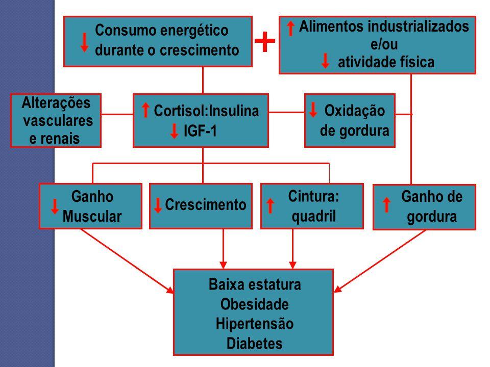 Baixa estatura Obesidade Hipertensão Diabetes Cortisol:Insulina IGF-1 Alterações vasculares e renais Alimentos industrializados e/ou atividade física
