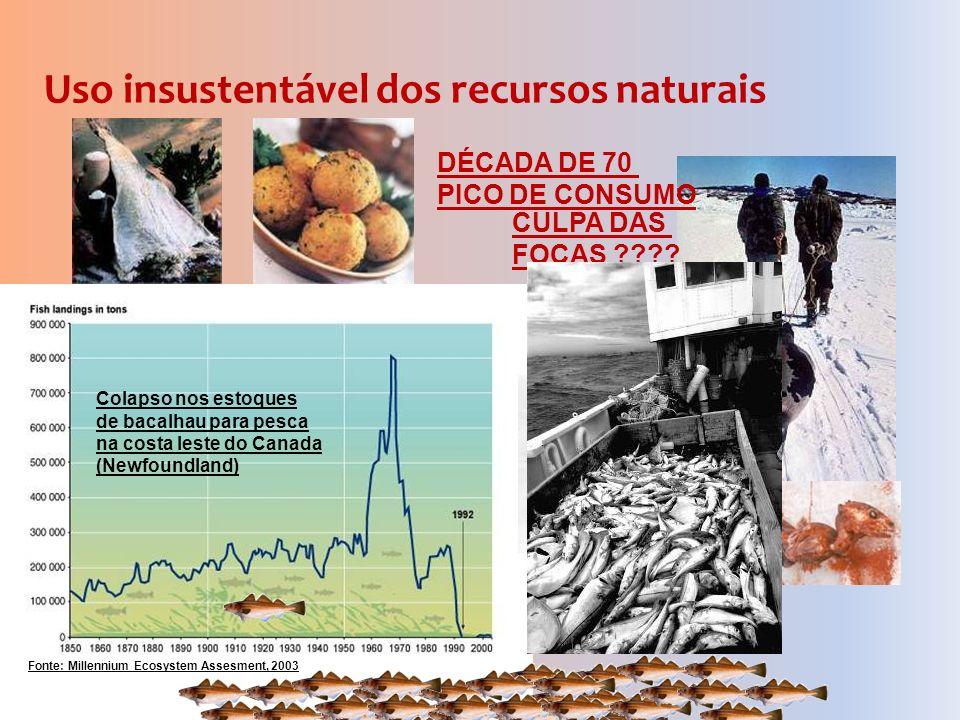 CULPA DAS FOCAS ???? Uso insustentável dos recursos naturais Fonte: Millennium Ecosystem Assesment, 2003 Colapso nos estoques de bacalhau para pesca n