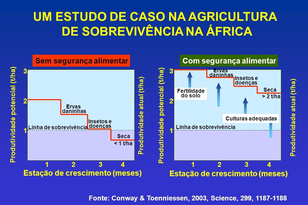 UM ESTUDO DE CASO NA AGRICULTURA DE SOBREVIVÊNCIA NA ÁFRICA Produtividade atual (t/ha) 1 2 3 1234 Ervas daninhas Insetos e doenças Seca Linha de sobrevivência > 2 t/ha Fertilidade do solo Com segurança alimentar Culturas adequadas Estação de crescimento (meses) Produtividade potencial (t/ha) Fonte: Conway & Toenniessen, 2003, Science, 299, 1187-1188 Produtividade potencial (t/ha) Estação de crescimento (meses) 123 4 1 2 3 Linha de sobrevivência Ervas daninhas Insetos e doenças Seca < 1 t/ha Sem segurança alimentar Produtividade atual (t/ha)
