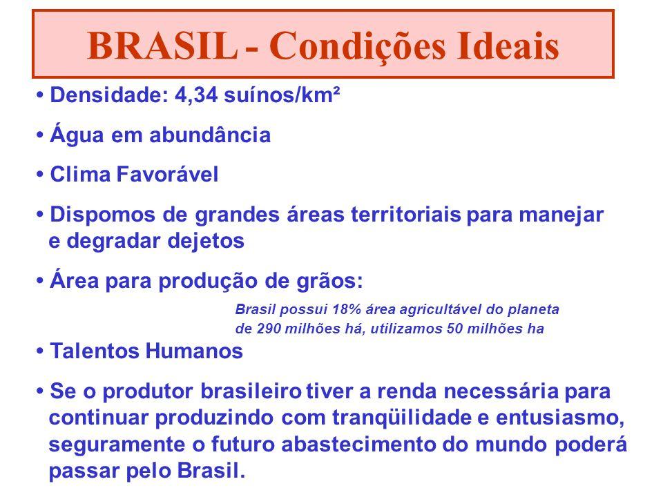 BRASIL - Condições Ideais Densidade: 4,34 suínos/km² Água em abundância Clima Favorável Dispomos de grandes áreas territoriais para manejar e degradar