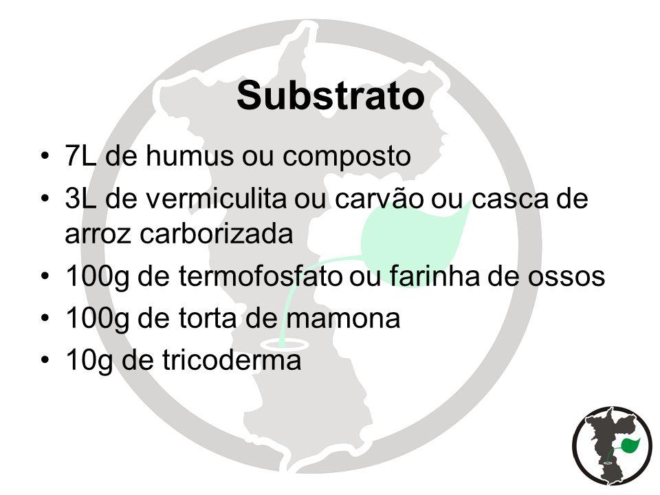 Substrato 7L de humus ou composto 3L de vermiculita ou carvão ou casca de arroz carborizada 100g de termofosfato ou farinha de ossos 100g de torta de