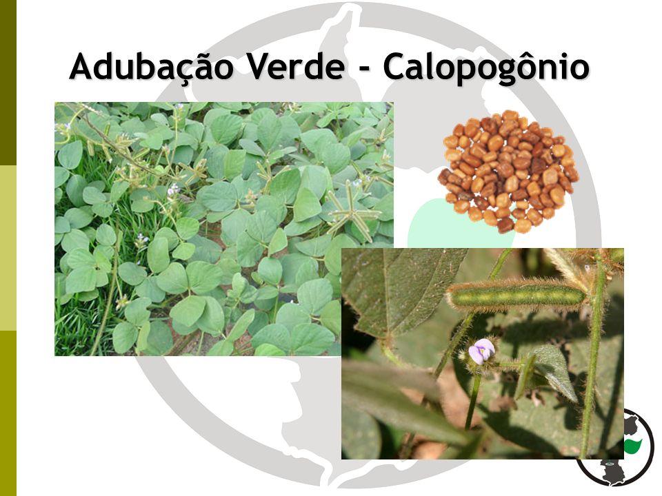 Adubação Verde - Calopogônio