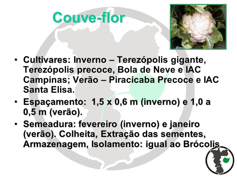 Couve-flor Cultivares:Cultivares: Inverno – Terezópolis gigante, Terezópolis precoce, Bola de Neve e IAC Campinas; Verão – Piracicaba Precoce e IAC Sa