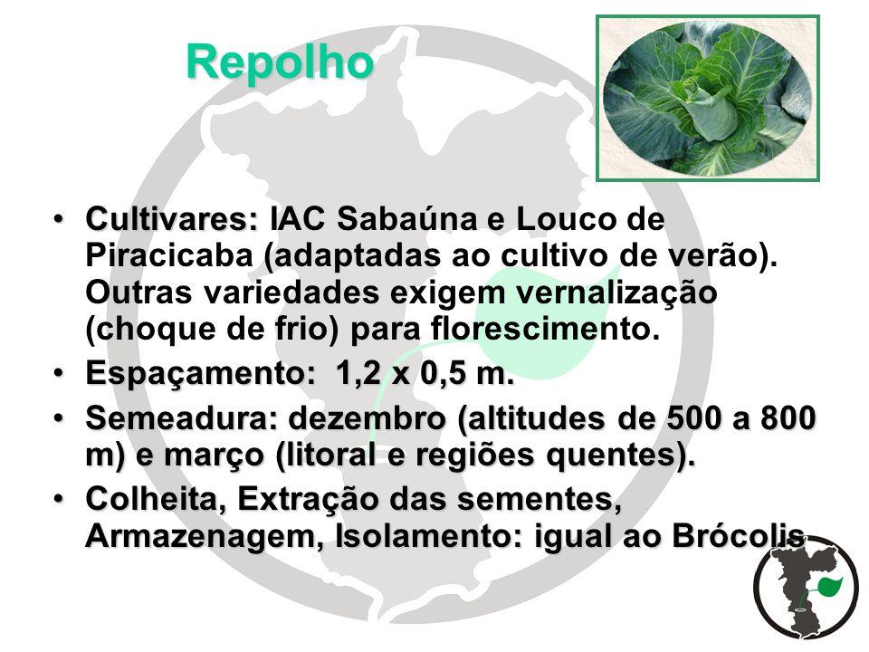Repolho Cultivares:Cultivares: IAC Sabaúna e Louco de Piracicaba (adaptadas ao cultivo de verão). Outras variedades exigem vernalização (choque de fri